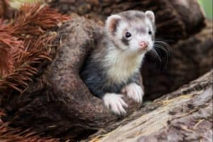 moon palm civet. ferret. animals