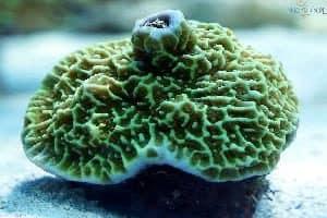 coral reef, plants. sea plants, ocean,
