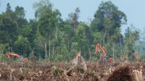 Indonesia Deforastation, forest, illegal logging