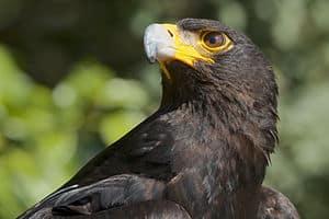 endangered animals, animals, indonesia