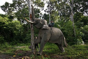 endangered animals, indonesia, animals, endangered