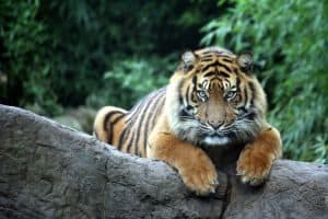 endangered animals, indonesia, animals, endangered