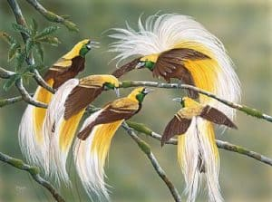 bird of paradise, birds, beautiful bird