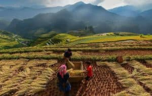Lifestyle, Indonesian Lifestyle, indonesia lifestyle, rural