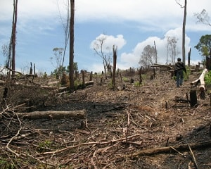 10 Province with the Worst Deforestation in Indonesia