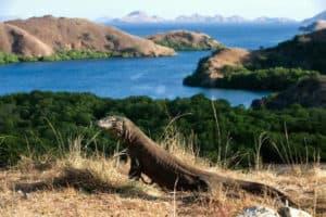 fauna, island, komodo island, place