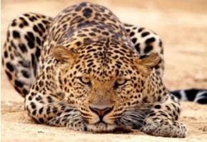 animals, indonesian animal, native animals