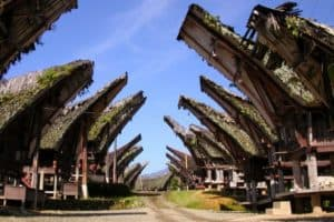 Top 7 Culture of Toraja  Social Life  Society  Facts of Indonesia