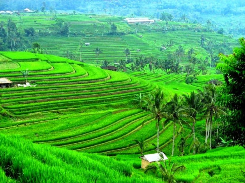 10 Importance of Agriculture in Indonesia