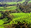 10 Types of Agriculture in Indonesia