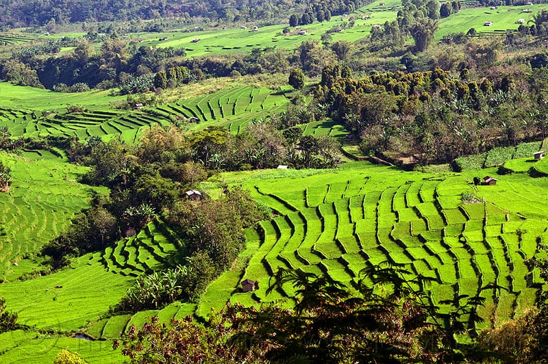 10 Incredible Facts of Indonesian Rice field