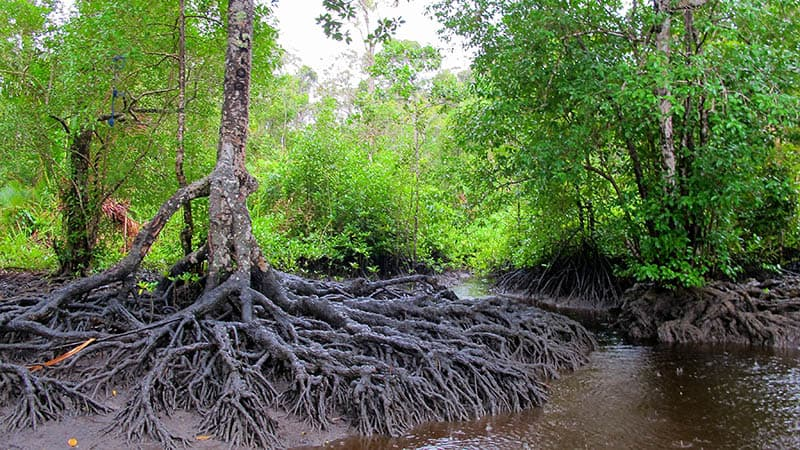 Top 15 Charming Mangrove Conservations in Indonesia