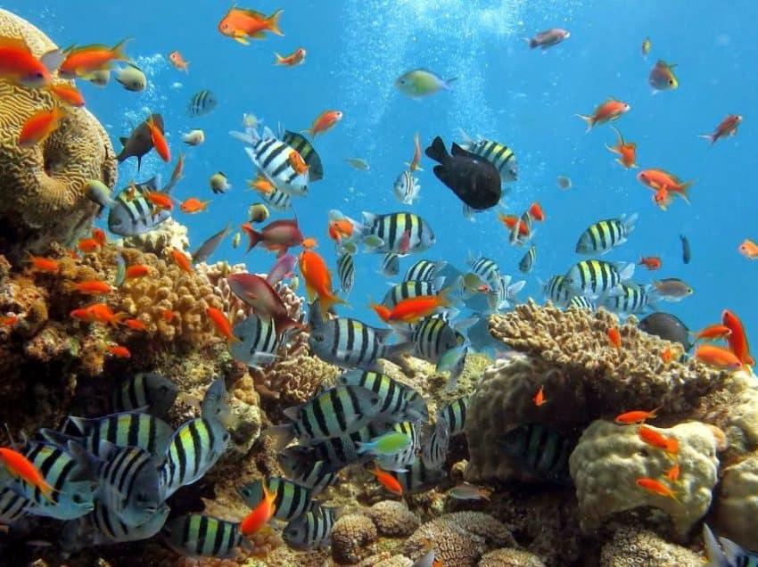 15 Wonderful Facts of Indonesian Marine You Never Imagine