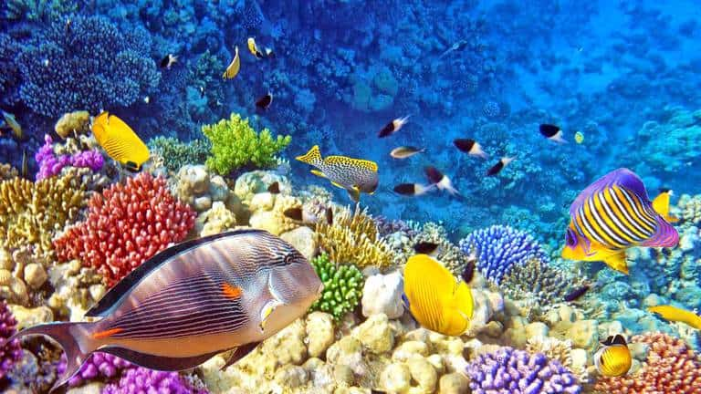 13 Popular Coral Reefs in Indonesia (#2 is Stunning Beauty)