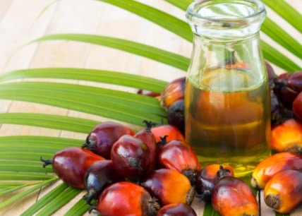 20 Importance of Palm Oil in Indonesia You Have to Know