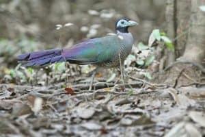 bird tokhtor sumatera
