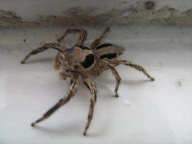 Kinds of Spiders are in Bali – Possible to Find