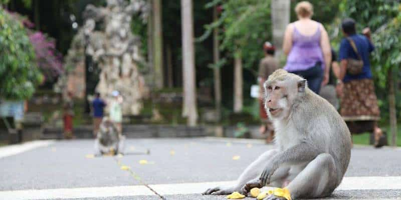 Kinds of Monkeys are in Bali You will Find