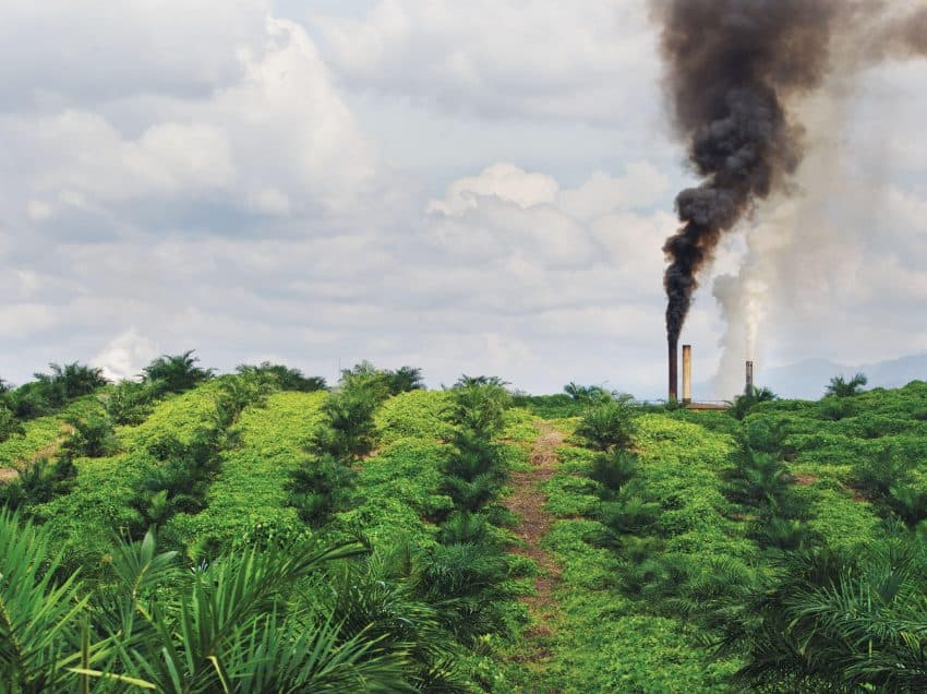 25 True Facts of Indonesian Palm Oil