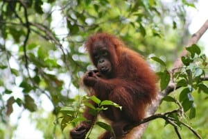 13 Best Places for Wildlife Indonesia