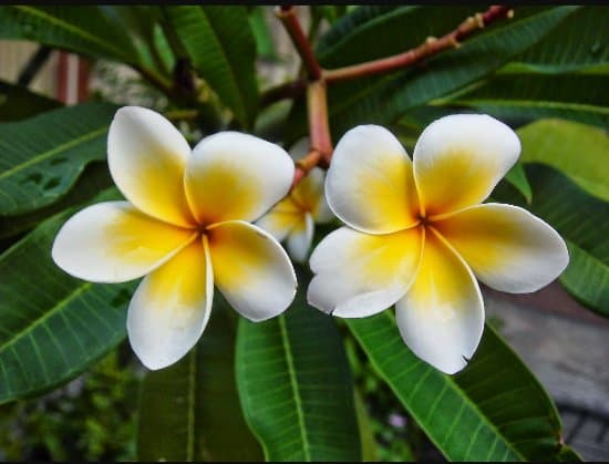 15 Popular Flower in Bali That Loved by People