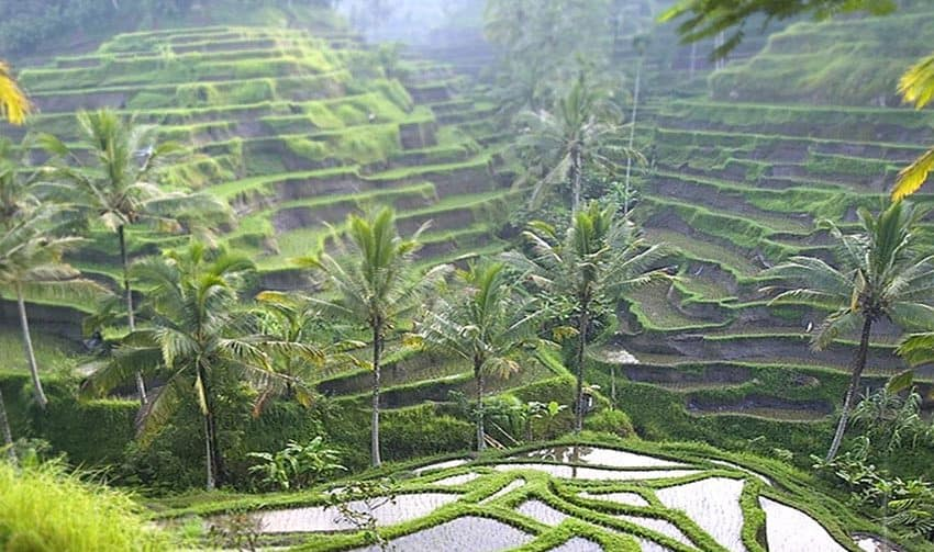 13 Importance of Rice In Bali Indonesia