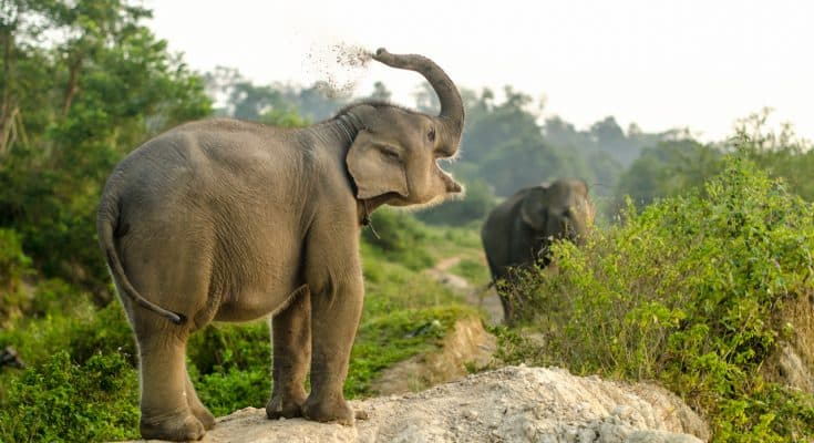 13 Interesting Facts about Indonesia Elephants