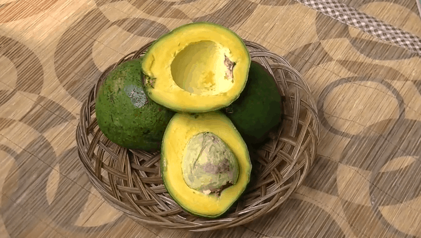 10 Types Of Avocado In Indonesia