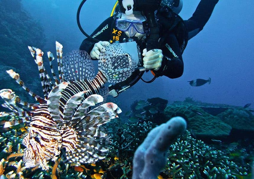 Anything You Can Find in These Best Snorkeling in Flores Indonesia