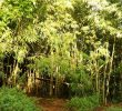 15 Types of Bamboo Indonesia You Can Find