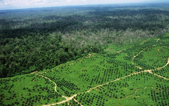 Ecological Impacts of Palm Oil Expansion in Indonesia