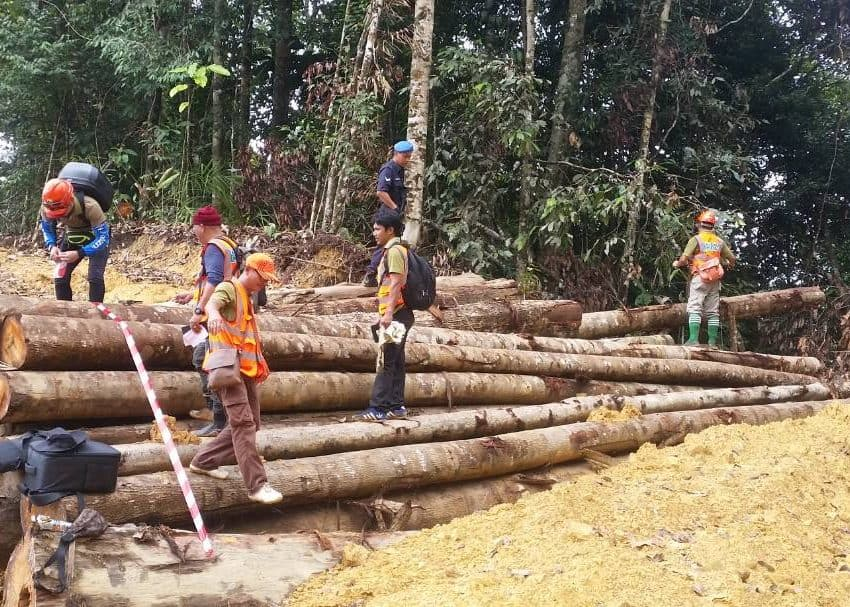 Disastrous Effects of Illegal Logging in Indonesia