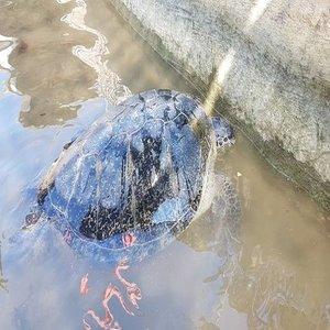 Turtle-Island-Tanjung-Benoa