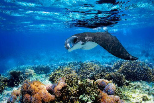 Guide to Diving in Komodo Island Indonesia – All You Need to Know