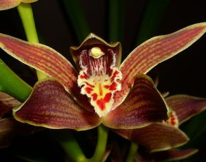 Hartinah Orchid