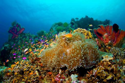Most Popular Marine Tourism in Indonesia