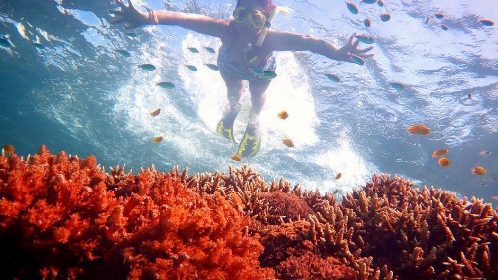 Best Snorkeling Places in Indonesia