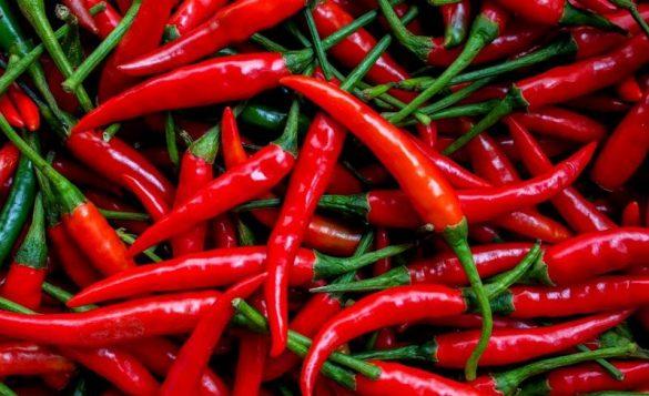 indonesian local chilli pepper