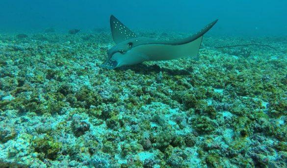 indonesia sea creature