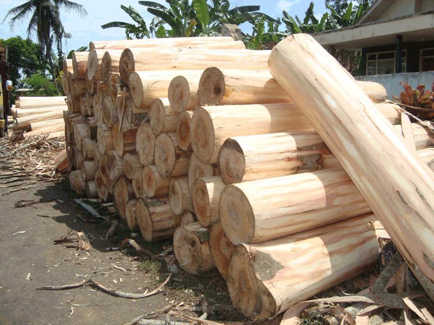 Albabsia Wood