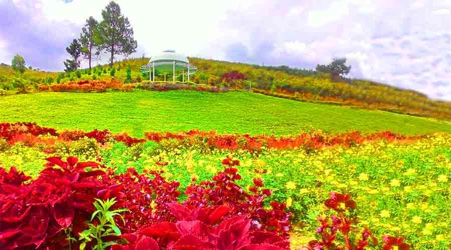 Sapo Juma Tongging Flower Garden