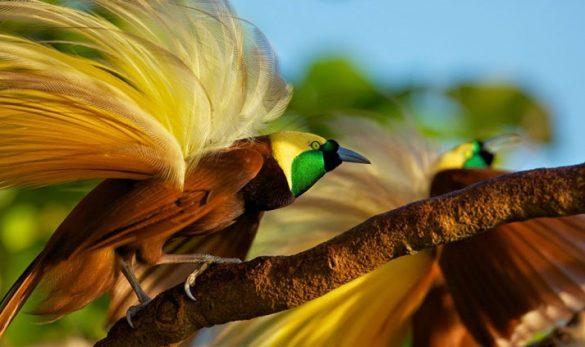endangered birds in indonesia