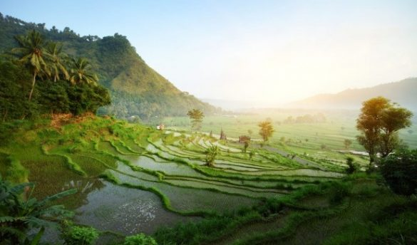 tips for solo travel in bali