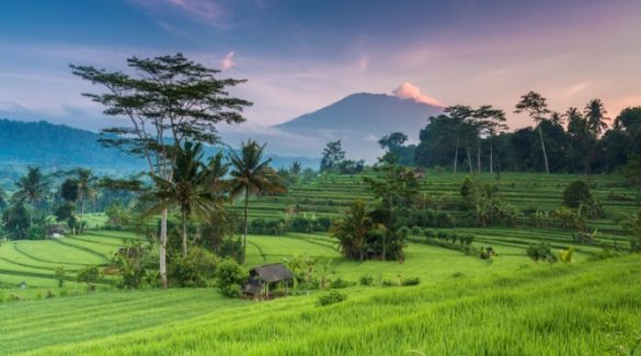 tips for vistting indoneisa for the first time