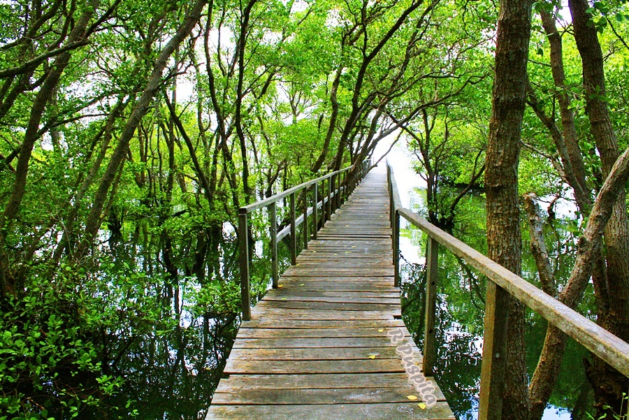 mangrove forest in indonesia
