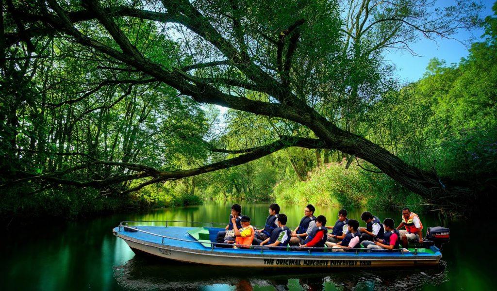 bintan mangorve forest