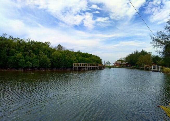 kampung nipah mangrove forest