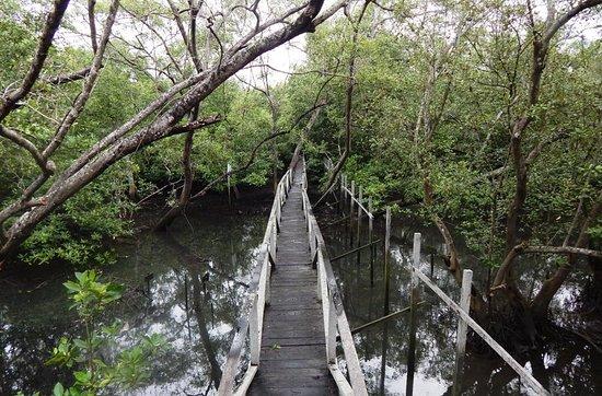 margomulyo mangrove forest